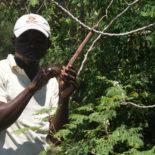 Jardin botanique des Cayes, visite mars 2017