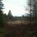 Québec, Montréal, Racine, Valcourt, ma cabane est tapie au fond des bois, entre sorcières et P'tite vingnenne