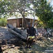Lambis en Haïti, farm conch