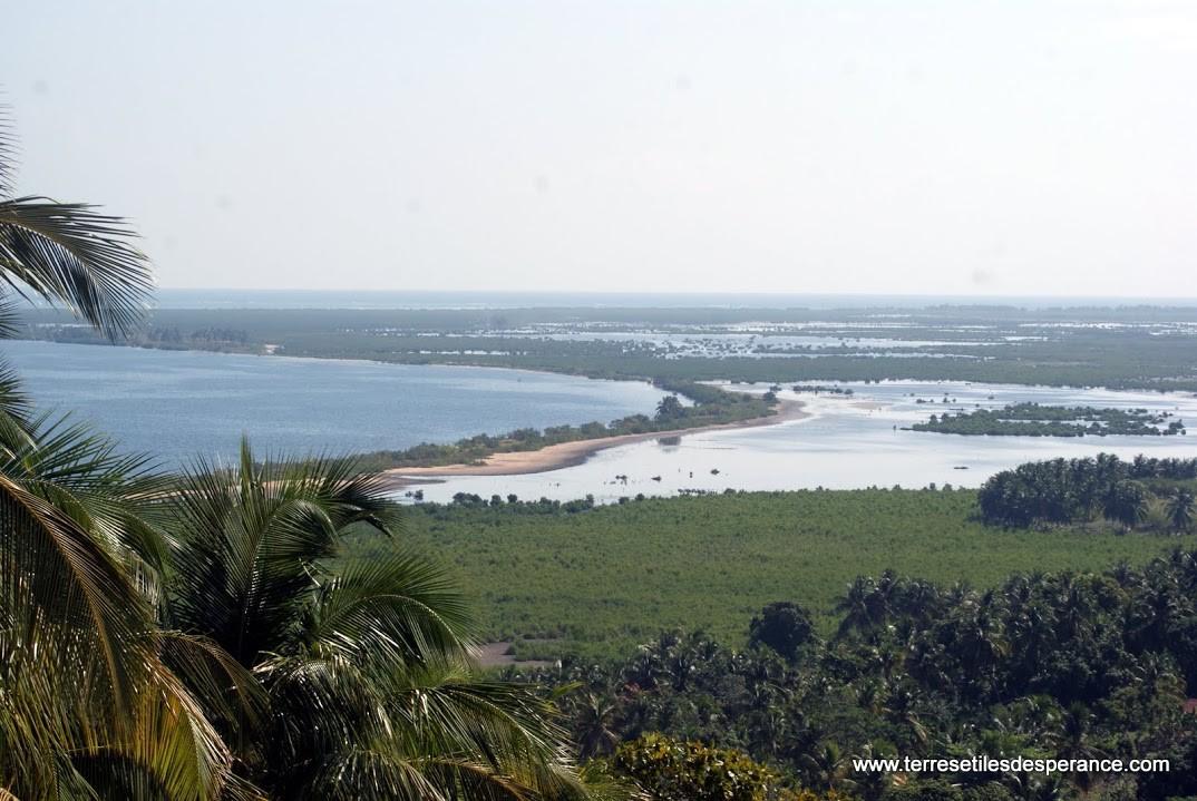 la mangrove sur l'île à vache