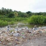 Sauvons la mangrove à l'île à vache